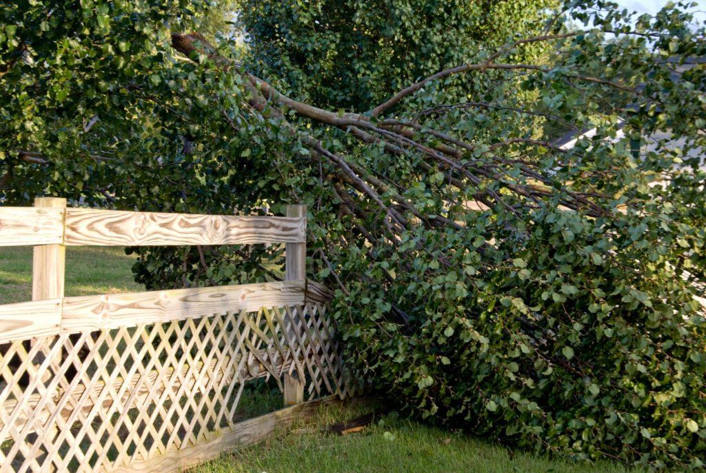 Jordan UT Tree Service - Emergency Tree Service 1