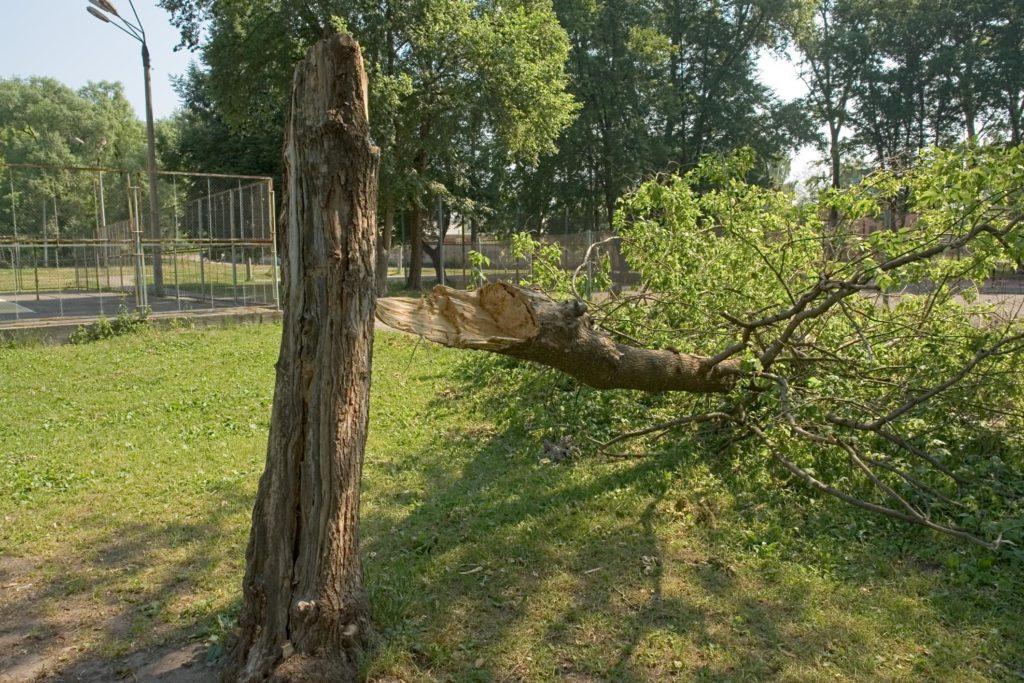 Jordan UT Tree Service - Emergency Tree Service