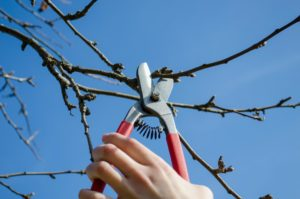 Jordan UT Tree Service - Residential And Commercial Tree Service