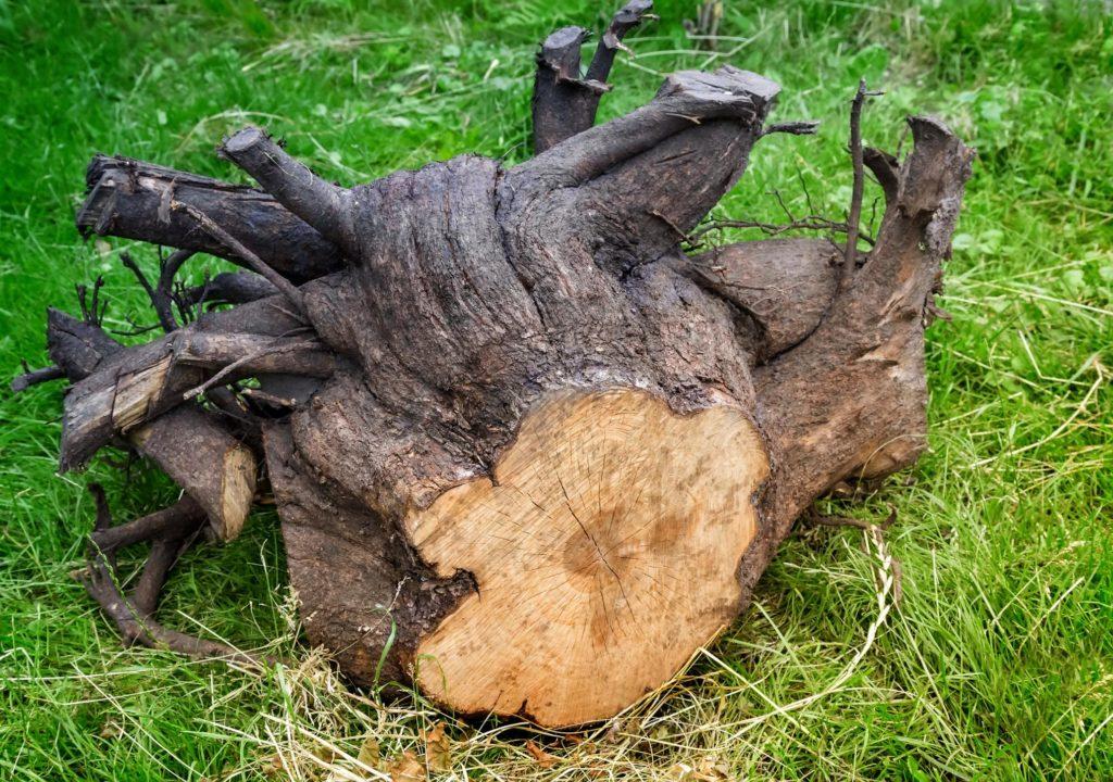 Jordan UT Tree Service - Stump Removal And Grinding 1