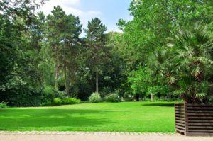 Jordan UT Tree Service - Tree Doctor and Tree Disease