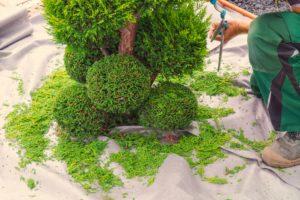 Jordan UT Tree Service - Tree Trimming, Pruning, and Cutting