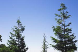 picture of a tree pruning guy in south jordan utah or west jordan utah