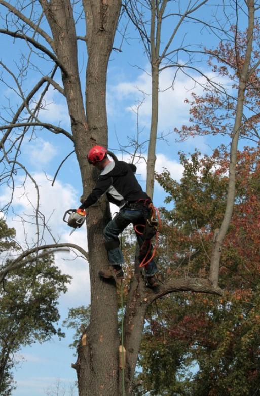 Picture of a west jordan utah tree service man cutting a tree in south jordan utah