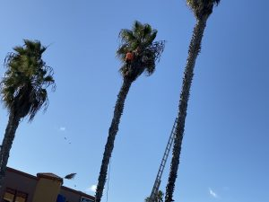this is a picture of the tree planting by jordan ut tree service