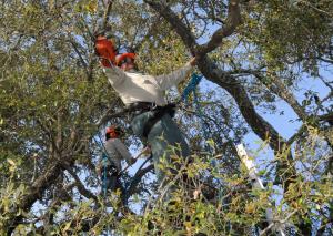 a picture of tree service in Draper, UT