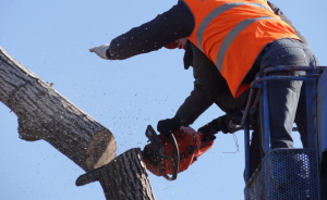 an image of tree service in Bluffdale, UT