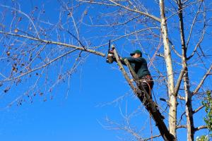 an image of lehi tree service