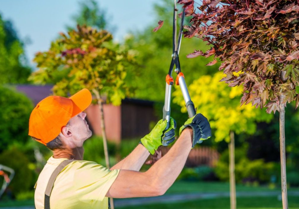 Jordan UT Tree Service - Residential And Commercial Tree Service 2