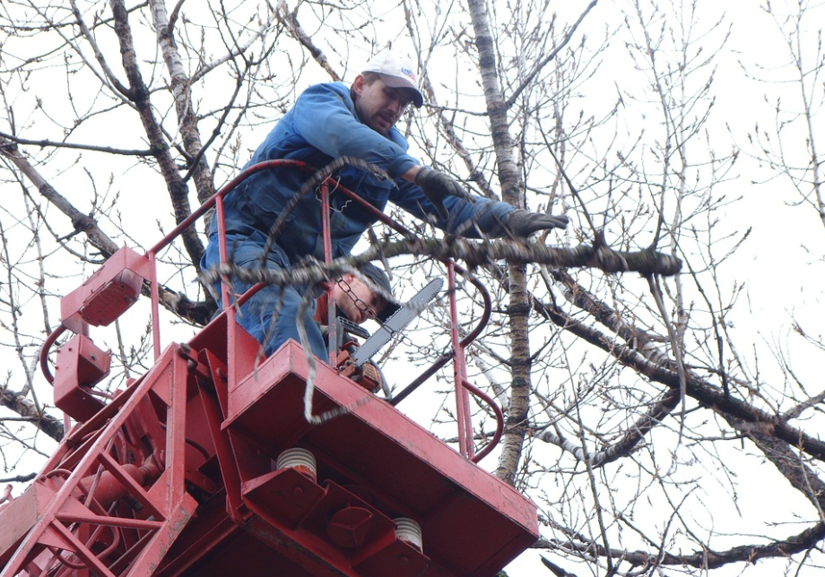 a picture of tree service in Provo, UT