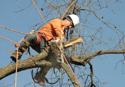 this is a picture of Woods Cross tree service.