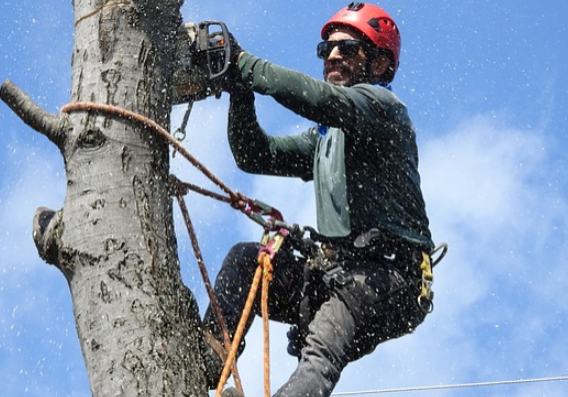 this is a picture of a professioanl jordan ut tree service expert for tree cabling and bracing