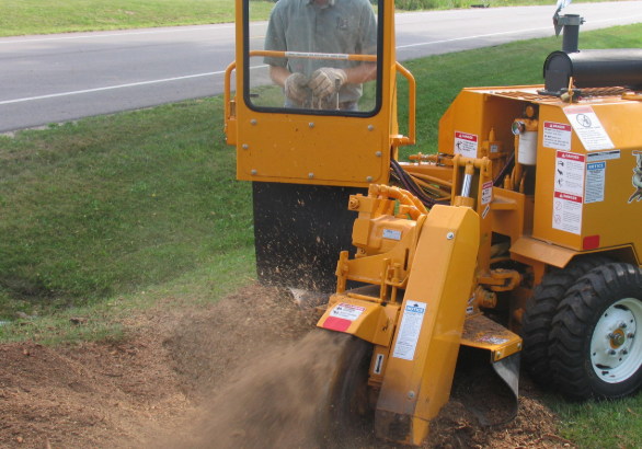 an image of Taylorsville tree service
